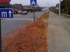 Vellen en heraanplanten bomen in diverse wijken in Avelgem