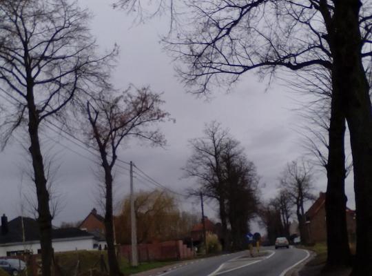 Vellen en heraanplanten van bomen langs N8 in Avelgem
